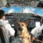 If Dogs Could Fly…